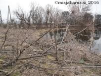 barszcz_z2