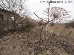 barszcz_z21